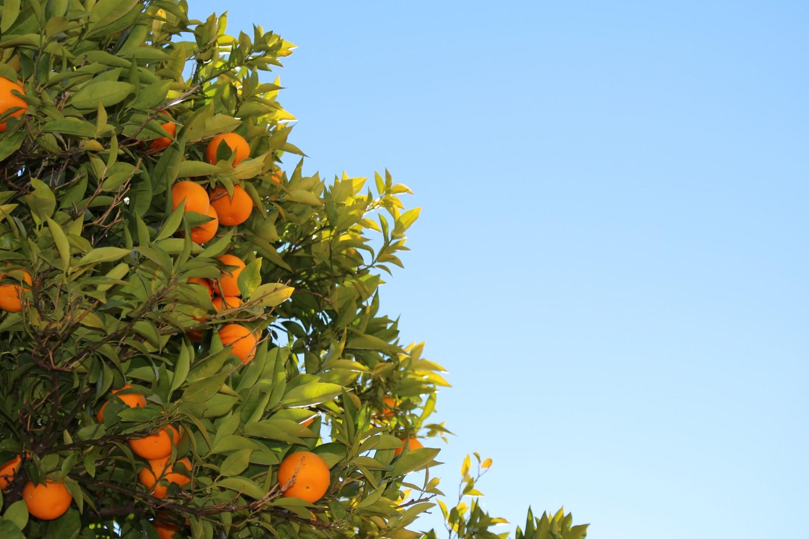 Oranges-e1434645060699